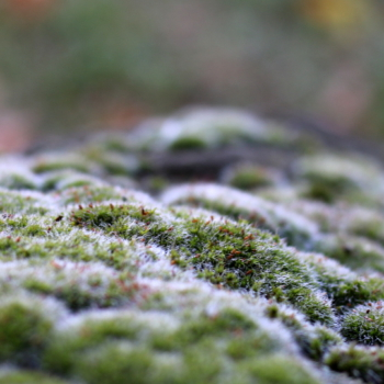 Herbstspaziergang-10-18-1