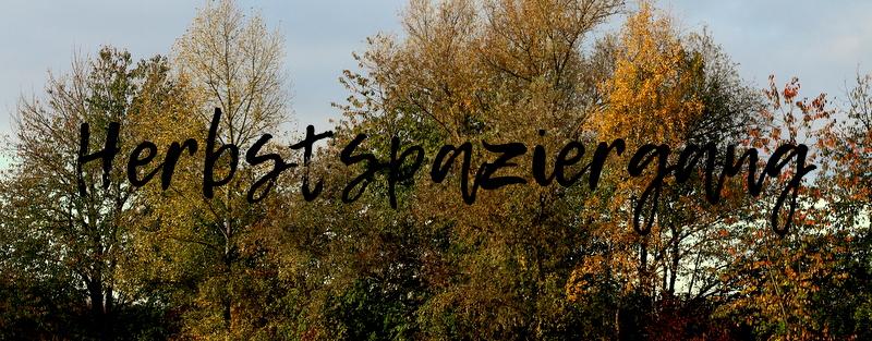 "|Fotografie| ""Herbstspaziergang"""