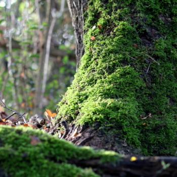 Herbstspaziergang-10-18-23
