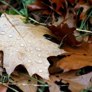 Herbstspaziergang-10-18-34