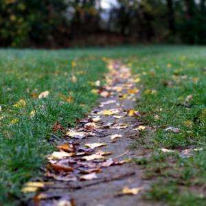 Herbstspaziergang-10-18-36