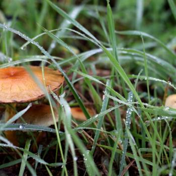 Herbstspaziergang-10-18-42