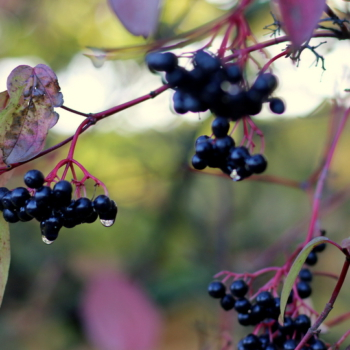Herbstspaziergang-10-18-5