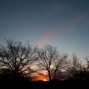 Trees-17.04.-18