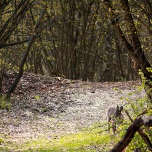 Trees-17.04.-19