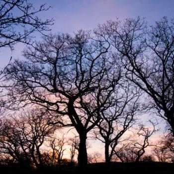 Trees-17.04.-23